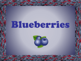 Blueberries - Pennington Biomedical Research Center