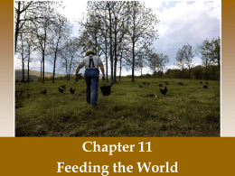 Ch 11 Feeding the world notes