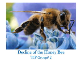 Honey Bee Notes Powerpoint - CBio-TipGr2-2012