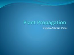 Plant Propagation - Learning While Doing