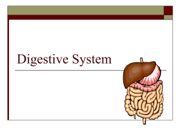 Digestive System - Ms. Montalbano's 7th grade Science