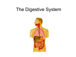The Digestive System - science
