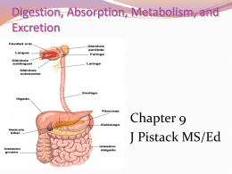 Digestion, Absorption, Metabolism, and Excretion