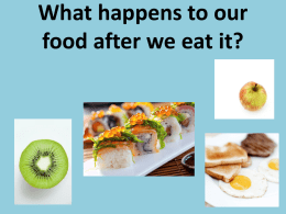 What happens to our food after we eat it? Step 1