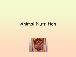 Animal Nutrition - Falmouth Schools