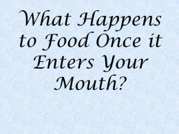 What Happens to Food Once it Enters Your Mouth?
