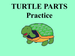 Turtle parts - local.brookings.k12.sd.us