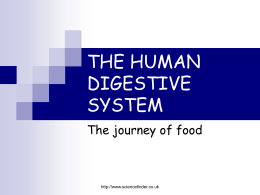 THE HUMAN DIGESTIVE SYSTEM.