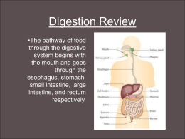Digestion Review