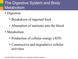 digestive system, nutrition