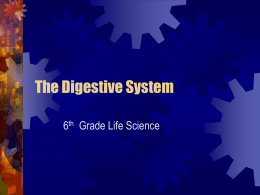 The Digestive System - Blountstown Middle School