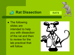 Rat Dissection Review