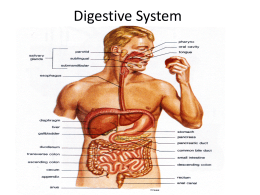Chapter 21 Digestive..