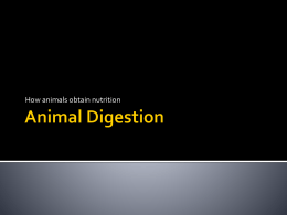 Animal Digestion Reproduction