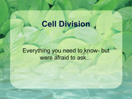Cell Division - Downers Grove