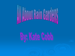 Multimedia Content-Kate Cobb All About Rain Gardens