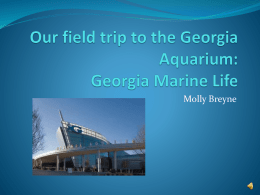 Our field trip to the Georgia Aquarium: Georgia Marine Life