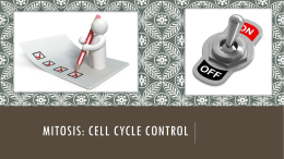 Mitosis: Cell Cycle Control