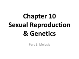 Meiosis ppt