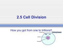 Mitosis and the Cell Cycle