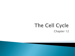 The Cell Cycle - Lake Stevens High School / Overview