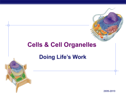 Tour of Cell Organelles