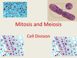 Mitosis and Meiosis - Chariho Regional School District