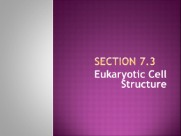 Section 7.3 - Home - Eagle Grove Community School District