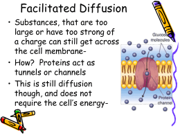 Facilitated Diffusion - Ms. Ramirez's Biology Page