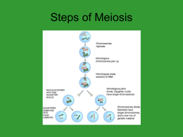 Steps of Meiosis - Sonoma Valley High School