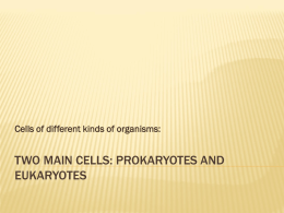 Two main cells: Prokaryotes and Eukaryotes
