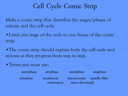 Cell Cycle Comic Strip