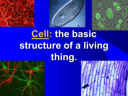 1665- THE CELL THEORY -1839