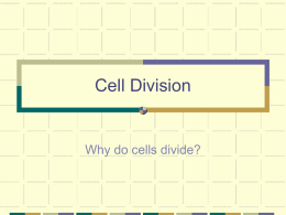 Cell Division - St. Clairsville High School