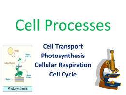 Cell Processes - Madison County School District