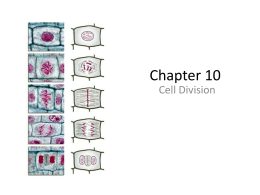 Cell Division: Mitosis & Meiosis