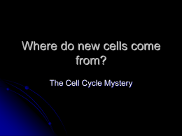Where do new cells come from