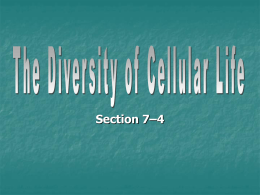 the diversity of cell life 7-4