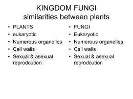 KINGDOM FUNGI similarities between plants