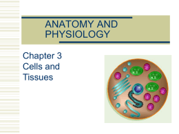 Cells and Tissues PPT