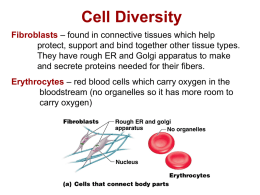 Type of Cell Diversity