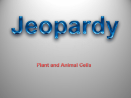 plants and animal cells review
