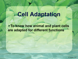 Cell Adaptation - Noadswood Science