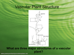 Vascular Plant Structure - Effingham County Schools