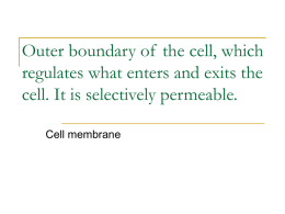 Outer boundary of the cell, which regulates what, enters and exits