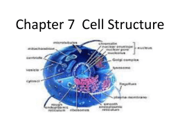 Chapter 7 Cell Structure