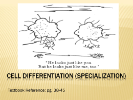 Stem Cells and Cell Differentiation