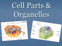 Cell Parts & Organelles