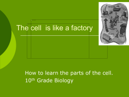 The cell is like a factory - Cal State LA