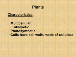 Plant Structure and Types of Cells Notes